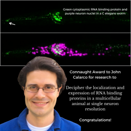 John Calarco's image with fluorescent C elegans proteins in the backgroud. Green indicates three sensory neurons along the length of the animal and purple spots indicate the nuclei of neurons.